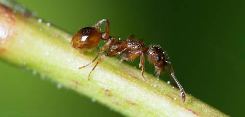 Ant by NoviceOfAnimation