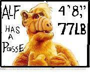 Alf has a posse