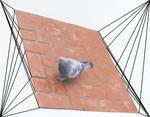 Portland bird