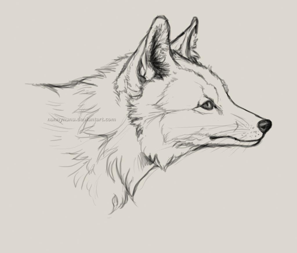 Fox Head Drawing By Nannynunu On Deviantart