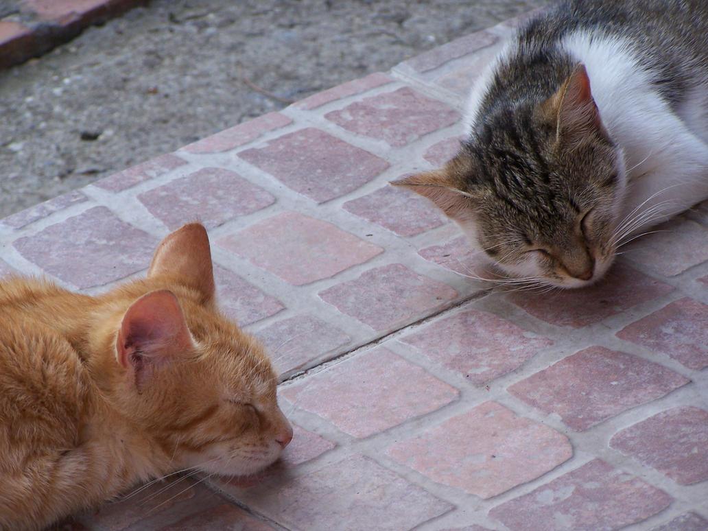 Cats by Inoxorum