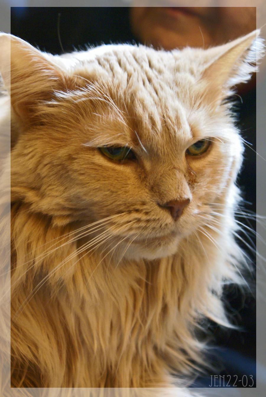 Blonde Cat Nude Photos 89