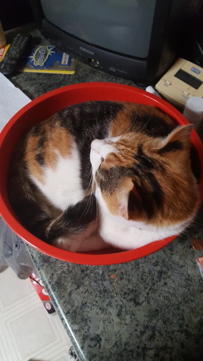 Liquid Cat 2.0 by chicosredhead