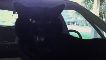 My Uber Driver's a Bit Finicky