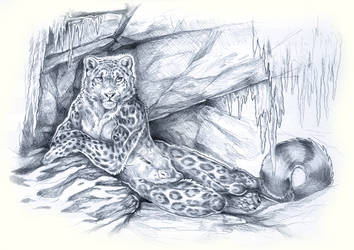 Ebon Snow Leopard Concept by balaa