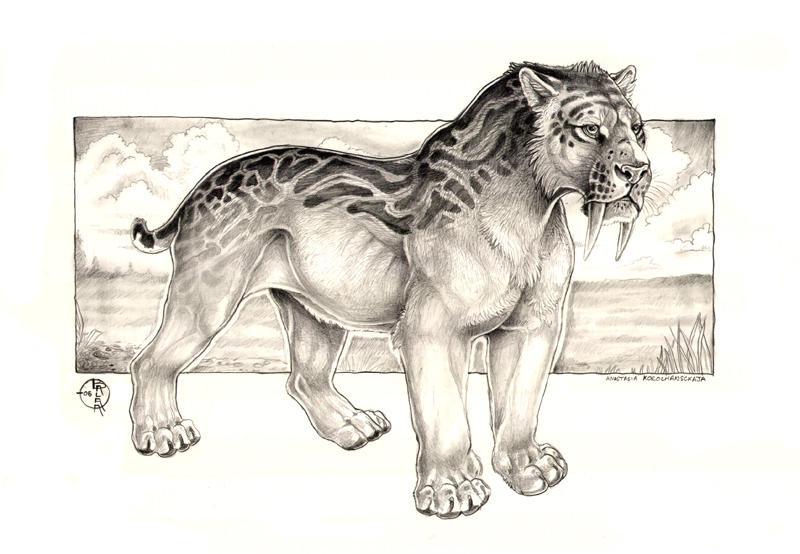 Smilodon Fatalis Concept by balaa