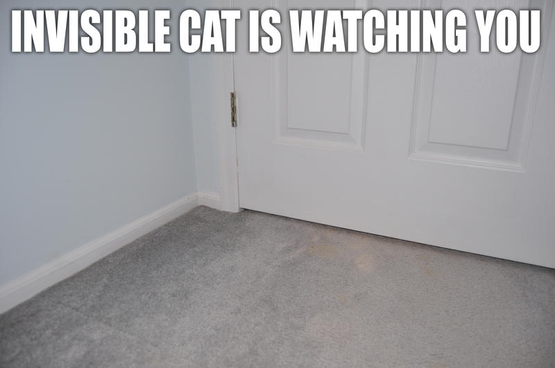 [Image: lolcat__invisible_cat_by_mjag.jpg]