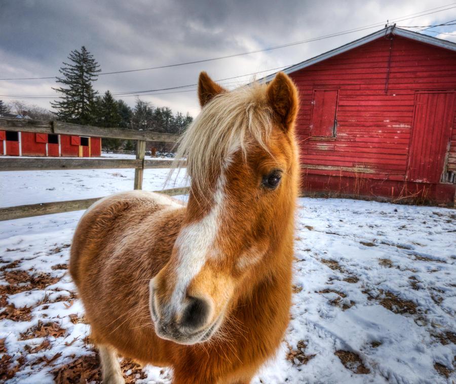 Fluffy Pony by Mjag