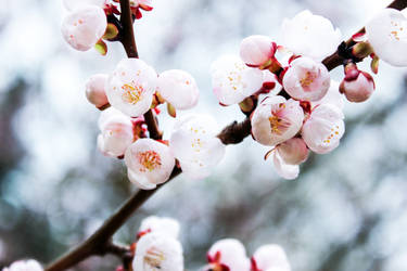 Spring memories by fion-fon-tier