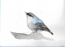 Eurasian nuthatch watercolour painting