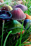 Candy Mushrooms by JackieHeartsyou