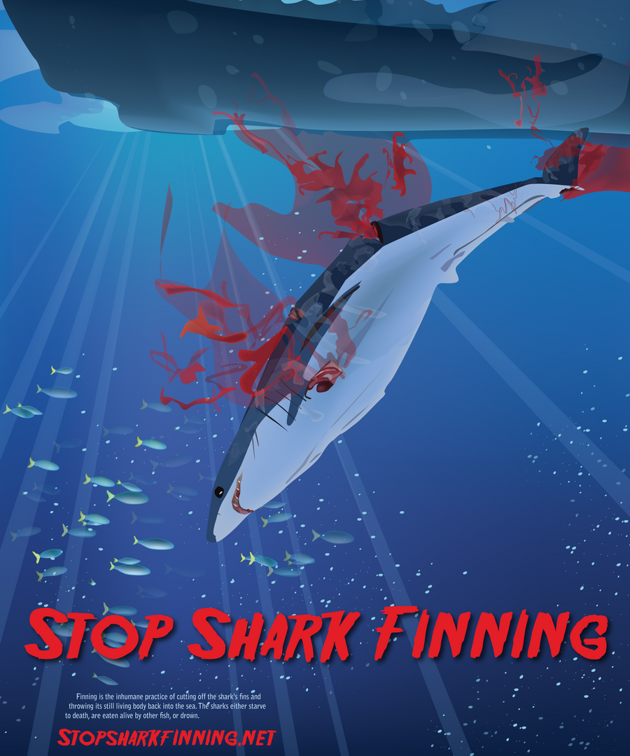 shark finning Globally, the shark population is under extreme stress, primarily due to the rise of  china and a growing middle class with a taste for a cultural dish: shark fin soup.