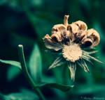Wild by shantaycinnamon