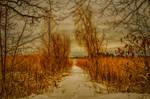 A path..