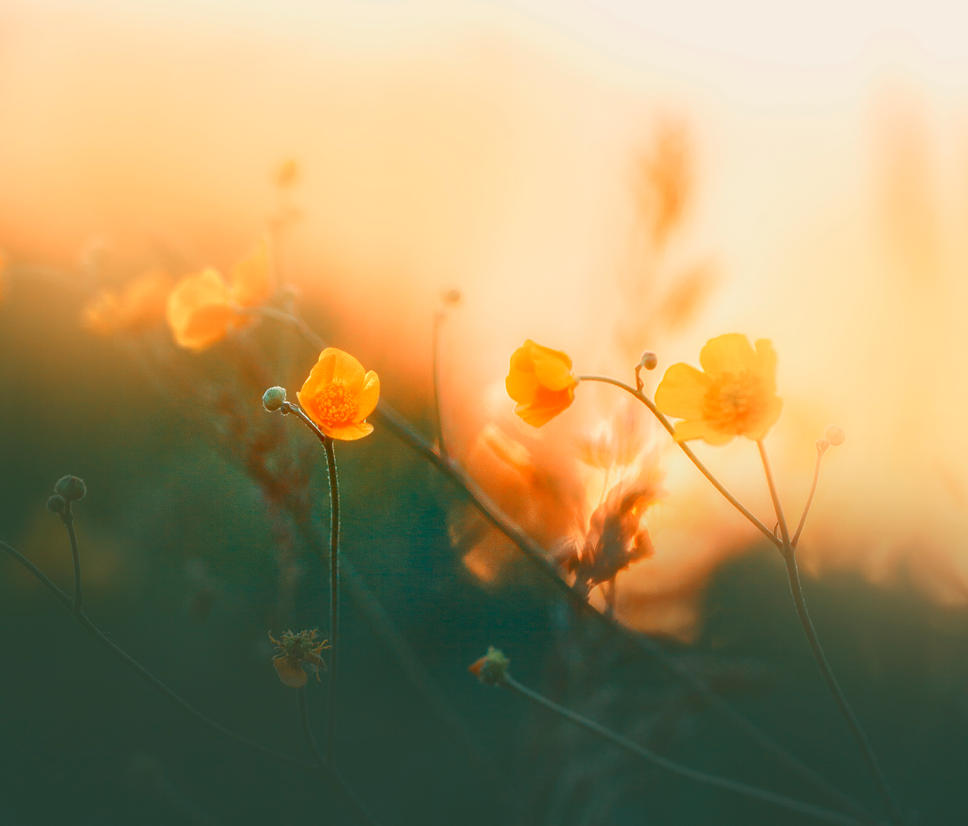 Flowers in the Sun [photo by cid228] by qwstarplayer