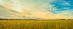 A field in Sweden