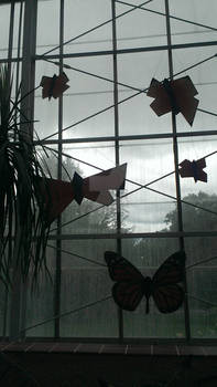 Butterflies and Gray Skies