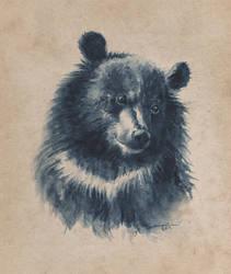 Oso Tibetano  by Macbeto