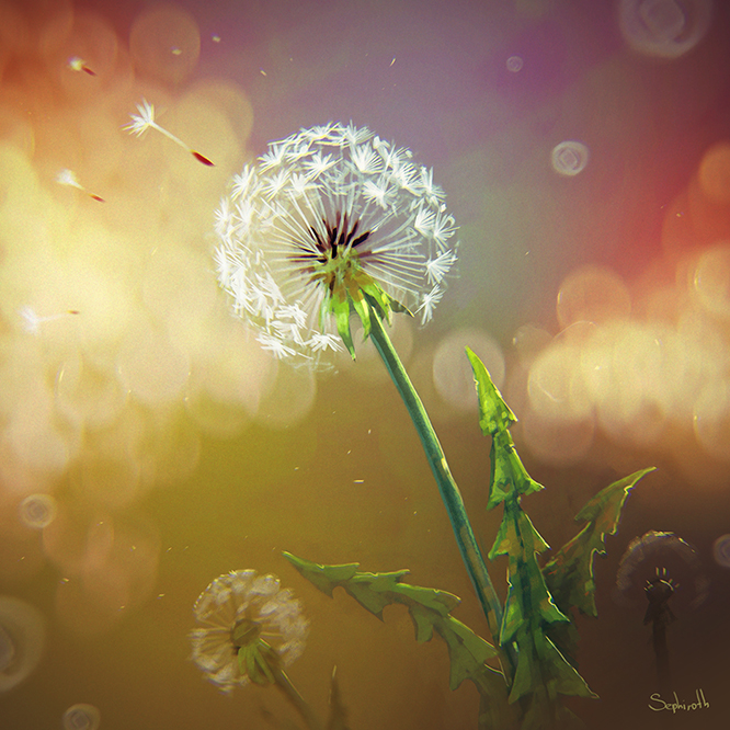 Dandelion Flower by Sephiroth-Art