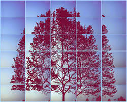 tree by robherr