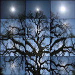 The Old Oak Tree - Square by robherr
