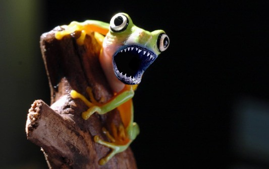 Frog Shark by Eng360