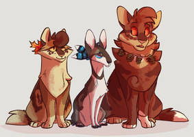 Thunderclan Medicine Cats by JAY-WlNG