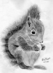 Squirrel by mikebranski