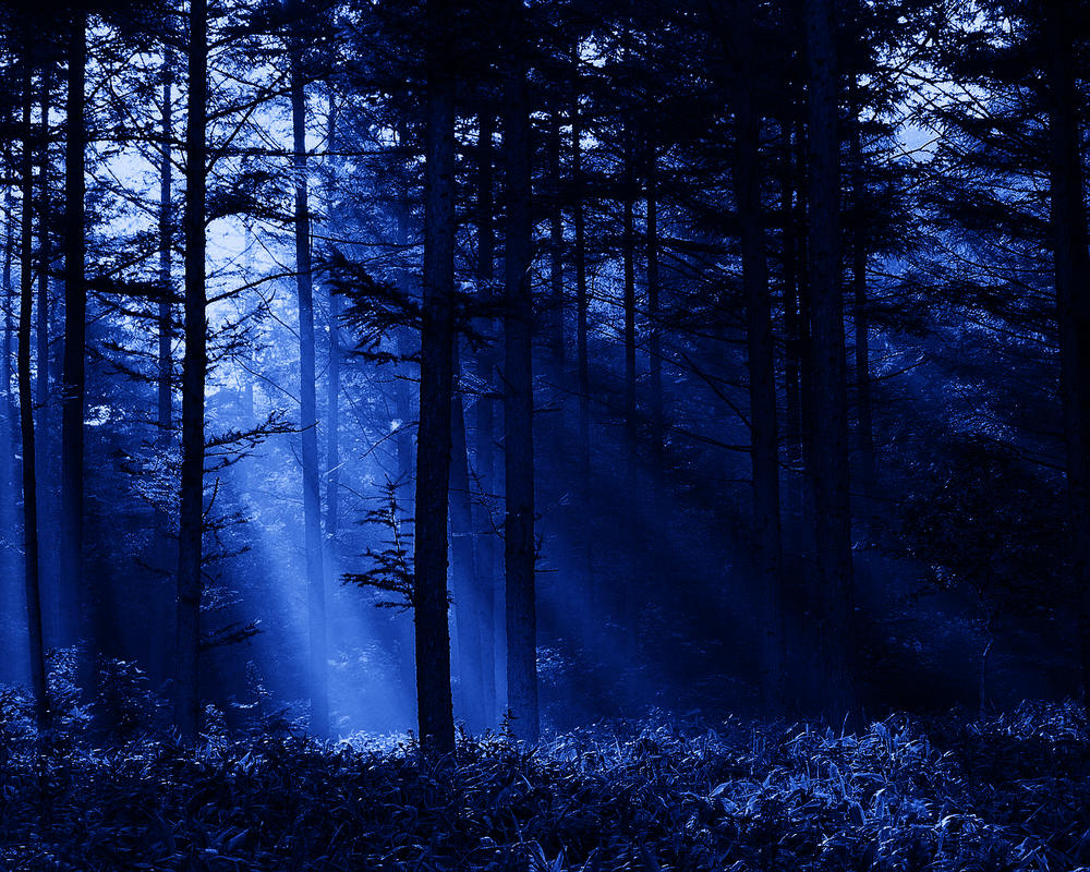 Night forest by Lingon...