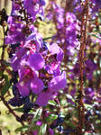 Some Purple Flowers