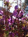 More Purple flowers XD