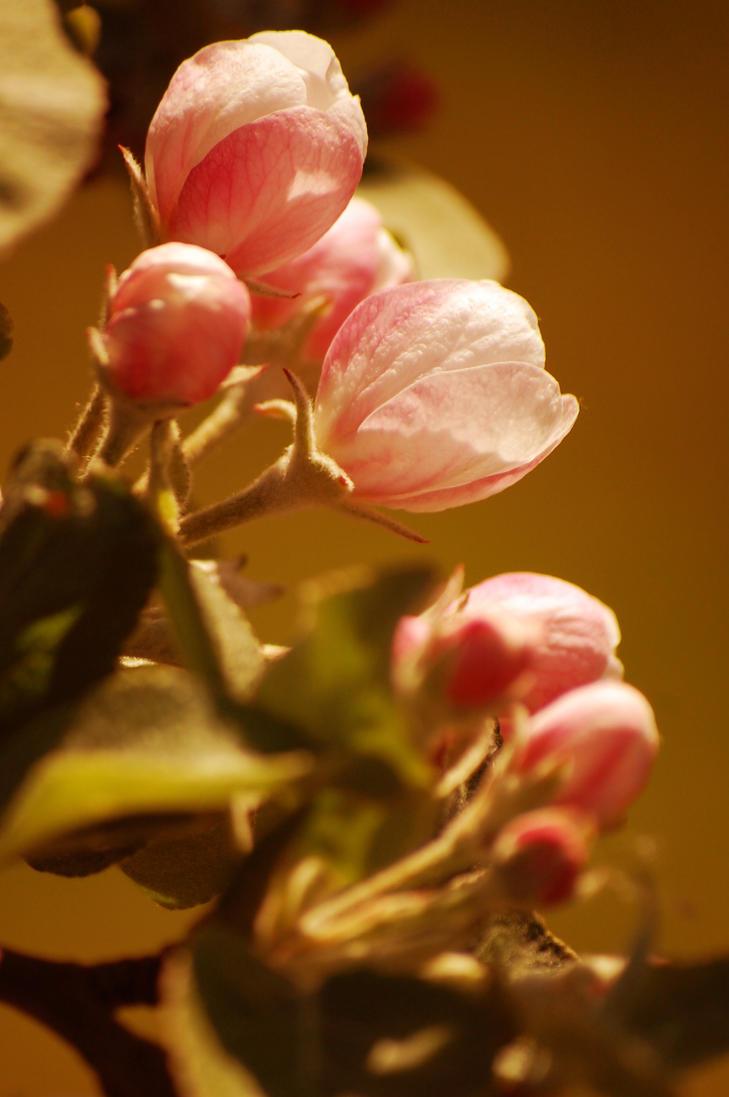 tree flowers by rashell-stocks