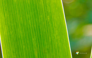 Windows 8 Green by rehsup