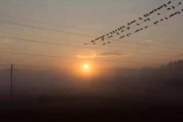Birdies by Timosetae