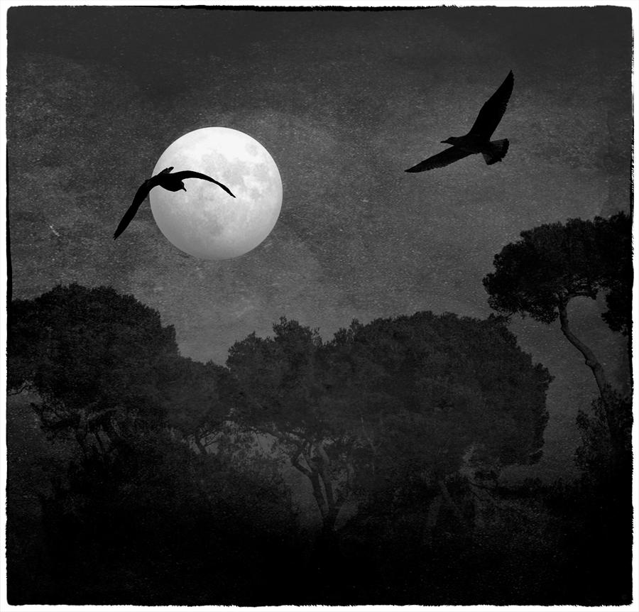 Two birds and a moon.... by Malcolm21