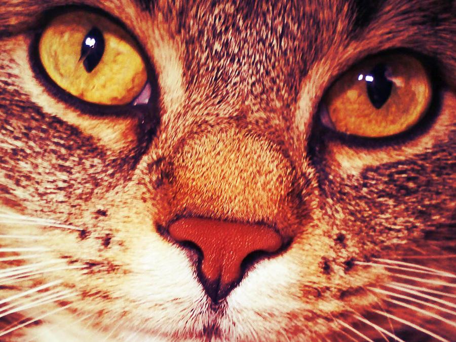 cat11 by alealara