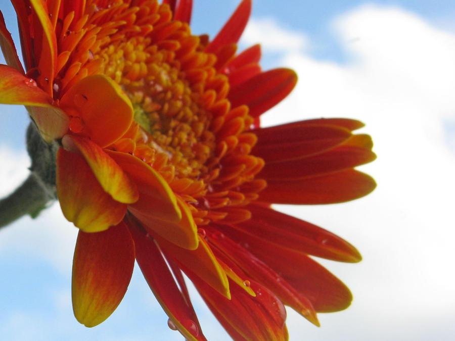 Flower151 by alealara