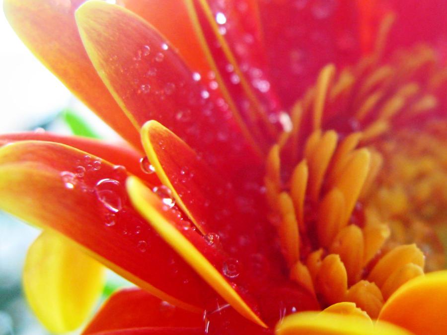 Flower152 by alealara