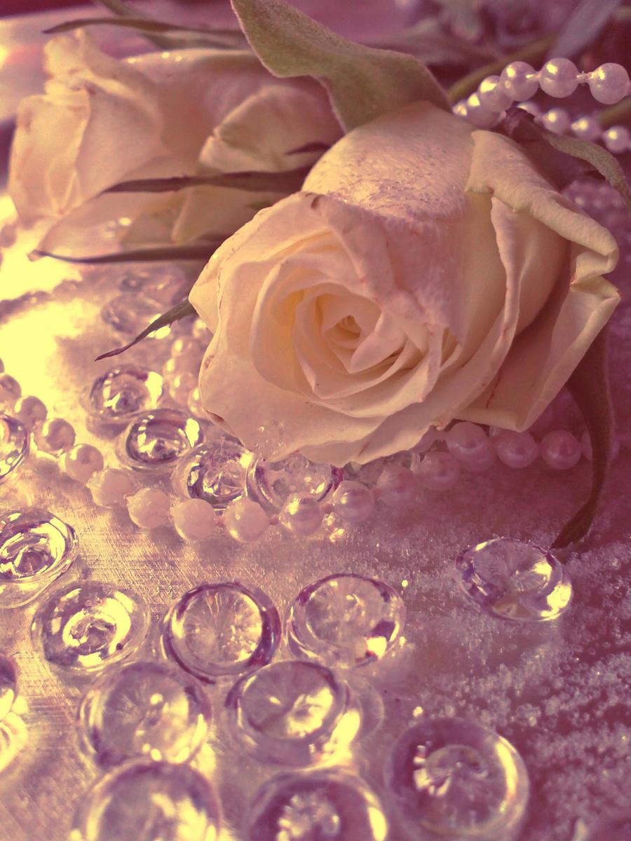 Rose134 by alealara