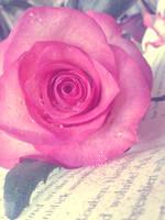 Rose171 by alealara