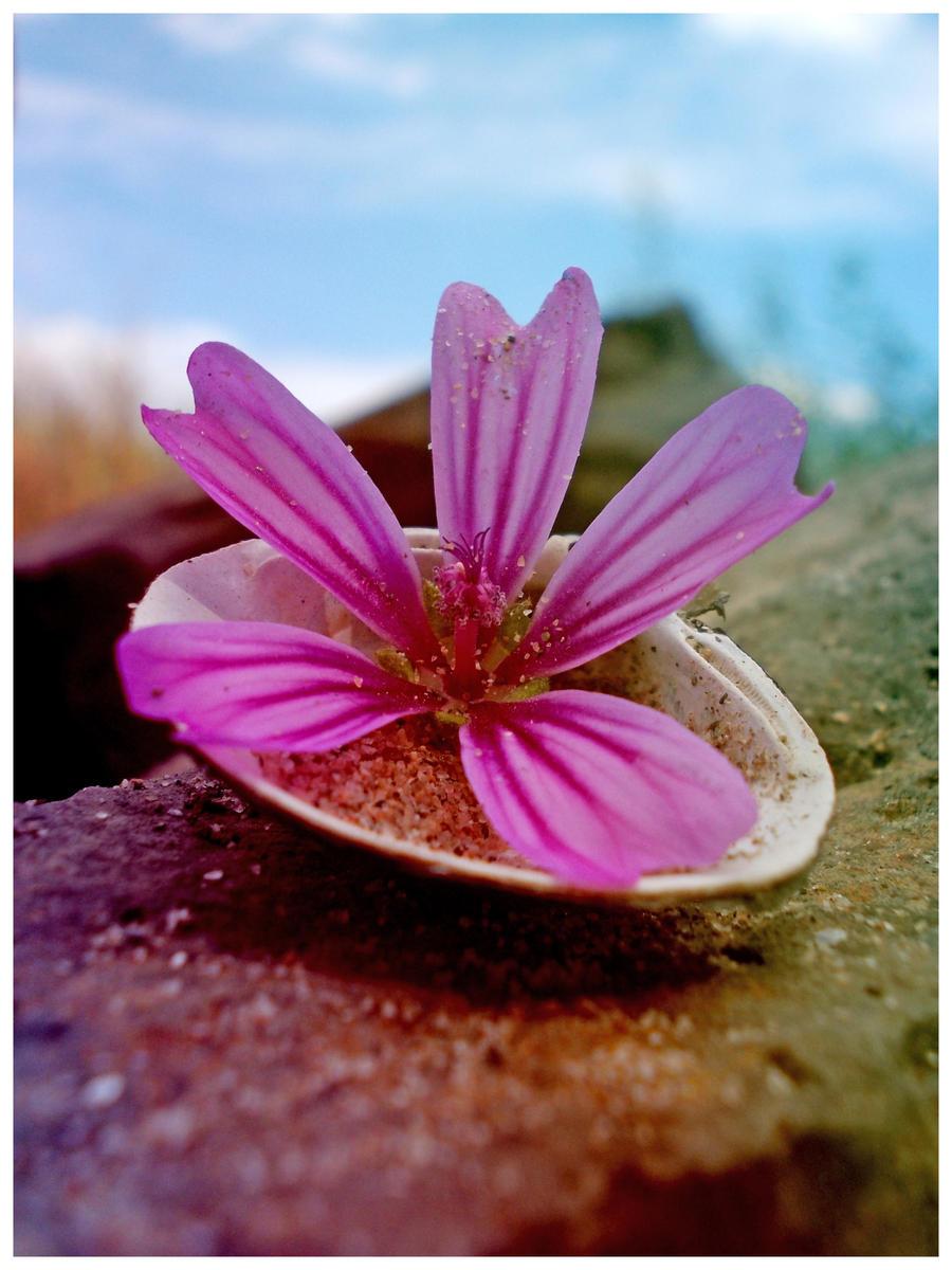 Flower301 by alealara