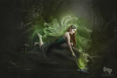 A Fairy's Touch
