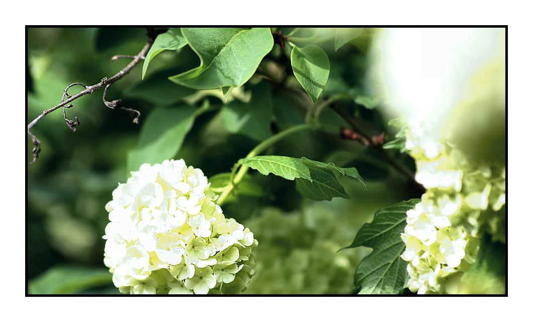 flower by Fr34kZ