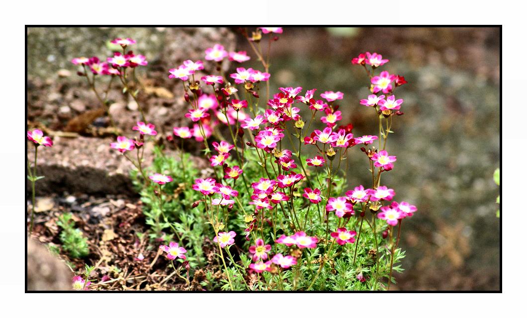little pinkish... by Fr34kZ