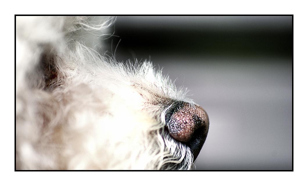 dog 2 by Fr34kZ
