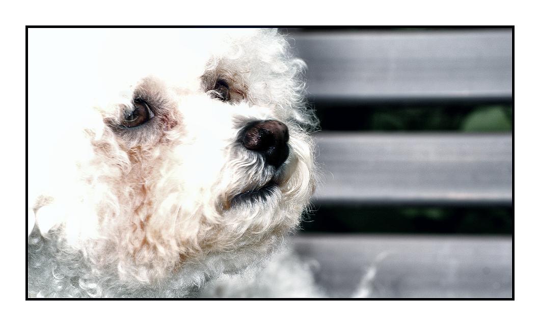 dog 3 by Fr34kZ