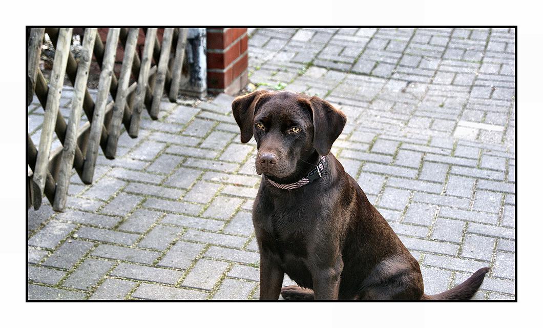 dog 4 by Fr34kZ