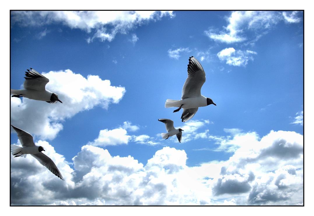 freedom by Fr34kZ