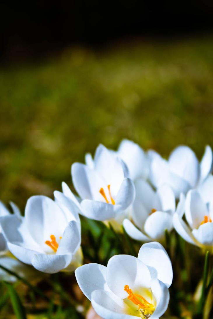 Spring by Fr34kZ