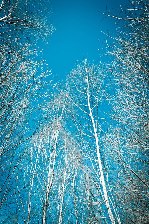 Winter by Fr34kZ